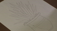 Timelapse Drawing an Agave Stock Footage