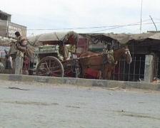 Horse Cart in Rural Sindh, Pakistan Stock Footage
