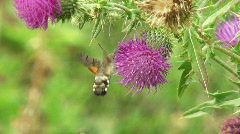 Stock Video Footage of Insects