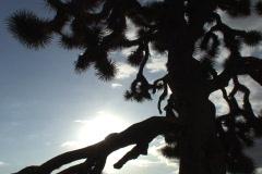 Joshua Tree Time Lapse SD 01 15x - stock footage