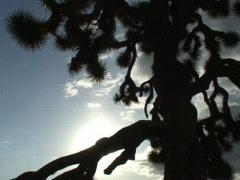 Joshua Tree Time Lapse SD 01 30x - stock footage