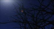 Night stars Stock Footage