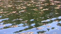 Autumn birch (Betula pendual) leaves floating across the pond ripple surface  Stock Footage