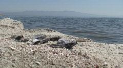 Dead Fish Lying on Beach Stock Footage
