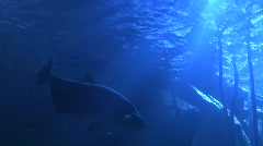 Light Shining from Bottom of Ocean Stock Footage