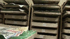 Silk worm farm Stock Footage