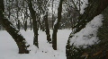 HD1080p Moscow City Winter scenic Footage