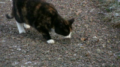 Cat play with mouse Stock Footage
