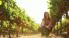 Napa Valley Vineyard - stock footage