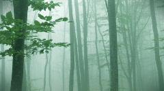 Foggy autumn forest Stock Footage