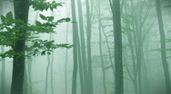Foggy autumn forest Stock Footage