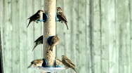Stock Video Footage of Bird Feeder