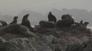 Sea lions at rest on a pier Stock Footage