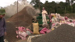 Workers Factory Coffee Production Vietnam Picking Harvesting Sort Arabica Beans Stock Footage