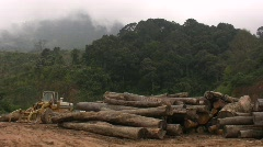 RAIN FOREST LOGGING Deforestation Vietnam Ecology Climate Change Lumber Industry - stock footage