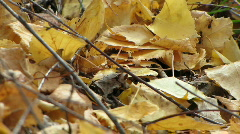 Ants on beach leaves ground level Stock Footage