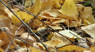 Stock Video Footage of ants on beach leaves ground level