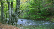 Stock Video Footage of River in forest