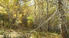 Falling leaves in woodland Stock Footage