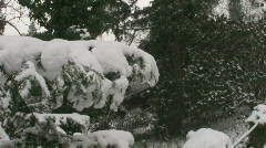 Snow on Pine Branch - stock footage