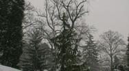 Snow on Trees 1 Stock Footage