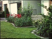 Home garden in the 1960s (vintage 8 mm amateur film) Stock Footage