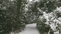 Snow Pine Path 1 - stock footage