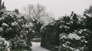 Snow Pine Path 2 Stock Footage