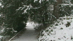 Snow Pine Path 3 - stock footage