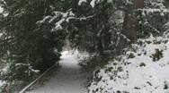 Snow Pine Path 3 Stock Footage