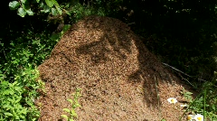 Big anthill Stock Footage