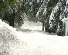 pines winter PAL - stock footage
