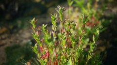 plant, flora Stock Footage