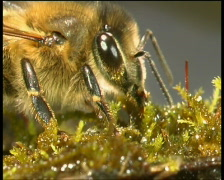Bee, honey,  beekeeper Stock Footage