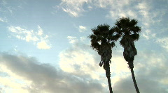 Dramatic Tropical Palm Trees and Clouds Time Lapse Stock Footage