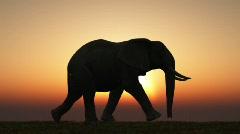 Elephant Sunset Stock Footage