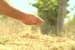 Winemaker sand in hand1 NTSC Stock Footage