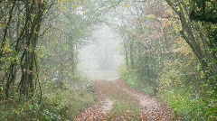 Foggy  tunnel  in the forest Stock Footage