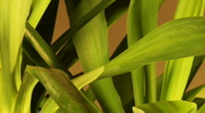 Rotate yucca loopable background Stock Footage