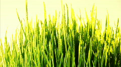 Green grass loopable background Stock Footage