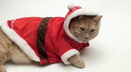 Cat in Santa outfit V3 - HD Stock Footage