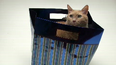Cat inside gift bag - HD Stock Footage