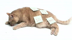 Cat with sticky note V2 - HD Stock Footage
