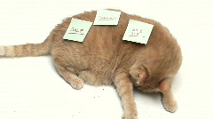 Cat with sticky note V5 - HD Stock Footage
