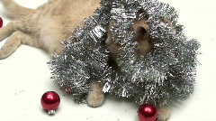 Cat with holiday tinsel V10 - HD Stock Footage