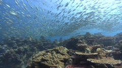 Huge school of silver fish hunted by predators - stock footage