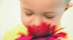 Little boy smelling red flower against white background Stock Footage