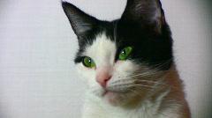 Cat w green eyes Stock Footage