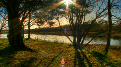 Trees moving shadows hdr time lapse - stock footage