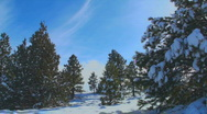 Snow-covered Woods Time Lapse Stock Footage